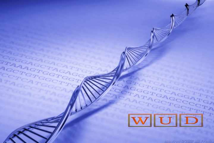 DNA Inspired Encryption To Protect Data In The Cloud